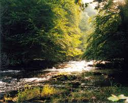 Exmoor fishing river Withypool